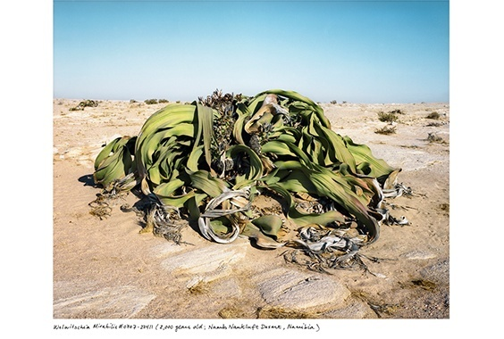 Rachel Sussman: The Oldest Living Things in the World