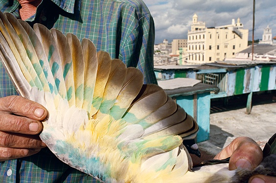 """Havana, 2008,"" from Violet Isle: A Duet of Photographs from Cuba"