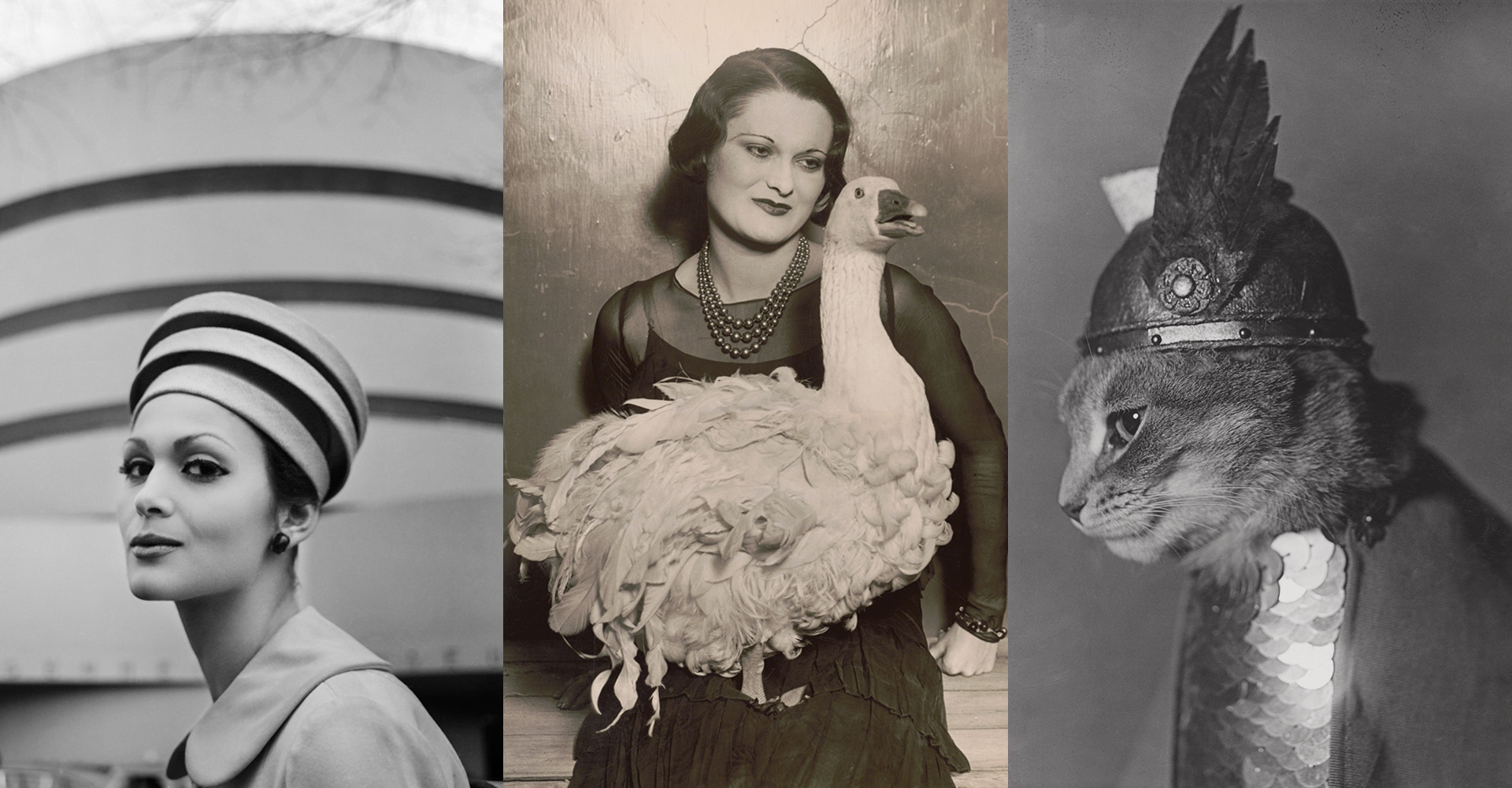 Not An Ostrich: And Other Images From America's Library