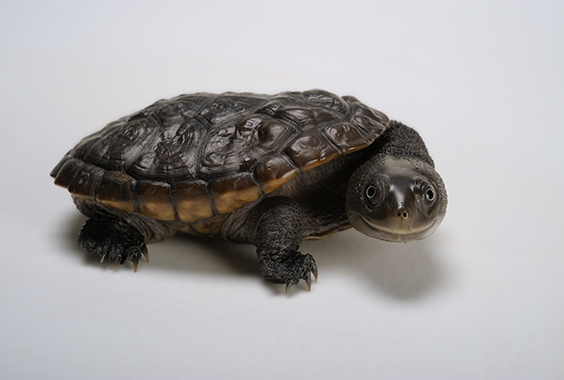 Silent Streams: Joel Sartore